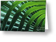 Palm Patterns Greeting Card