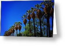 Palm Row Greeting Card