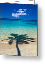Palm Shadows Greeting Card