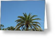Palm Sky Greeting Card