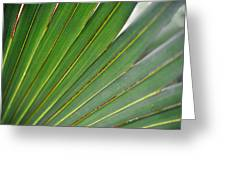 Palm Texture Greeting Card