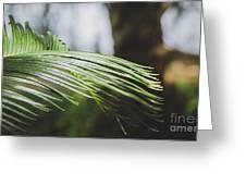 Palm Tree 5 Greeting Card