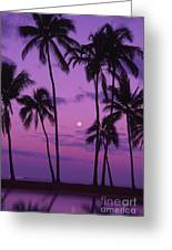 Palm Tree And Moon Greeting Card