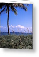 Palm Tree And Sea Grass On The Water Under Blue Sky Greeting Card