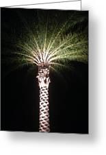 Palm Tree At Night Greeting Card