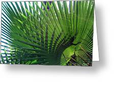 Palm Tree, Big Leafs Greeting Card