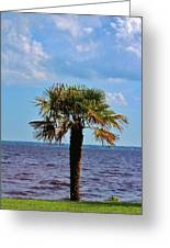 Palm Tree By The Lake Greeting Card