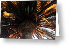 Palm Tree Canopy 0558 Greeting Card
