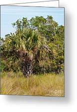 Palm Tree In Golden Grass Greeting Card