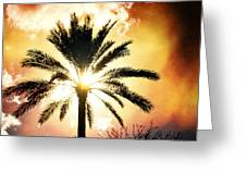 Palm Tree In The Sun #2 Greeting Card