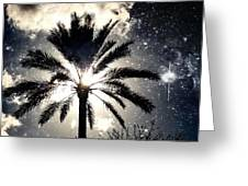 Palm Tree In The Sun #3 Greeting Card