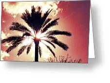 Palm Tree In The Sun Greeting Card