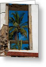 Palm Tree In The Window Greeting Card