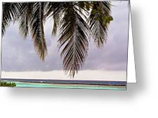 Palm Tree Leaves At The Beach Greeting Card