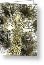 Palm Tree Pen And Ink Grayscale With Sepia Tones Greeting Card
