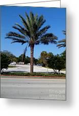 Palm Tree Psl. Greeting Card