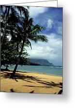 Palm Tree Shadows Greeting Card
