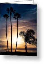 Palm Tree Sunset Silhouette Greeting Card