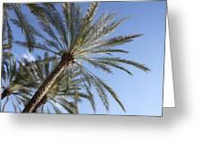 Palm Trees 2 Greeting Card