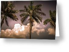 Palm Trees Against Beautiful Sky Greeting Card