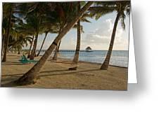 Palm Trees And Hammock On San Pedro Greeting Card