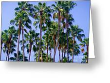 Palm Trees. California, Sunny Beauty Greeting Card