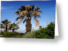Palm Trees Growing Along The Beach Greeting Card