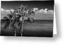 Palm Trees In Black And White At Laguna Beach Greeting Card