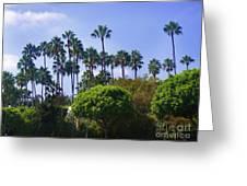 Palm Trees. My Beautiful California Greeting Card