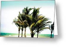 Palm Trees Ocean Breeze Greeting Card