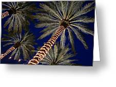 Palm Trees Wrapped In Lights Greeting Card