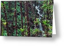 Palm Trunks And Waterfall El Yunque Greeting Card