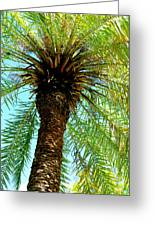 Palm Upview Greeting Card