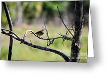 Palm Warbler Greetings Greeting Card