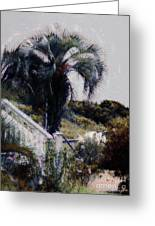 Palmetto Beach Greeting Card