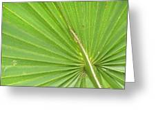Palmetto II Greeting Card