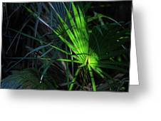 Palmetto In Light Greeting Card