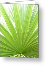 Palmetto Greeting Card