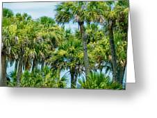 Palmetto Palm Trees In Sub Tropical Climate Of Usa Greeting Card