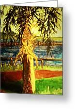Palmetto Tree Greeting Card