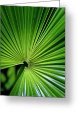 Palmgreen Greeting Card by Al Hurley