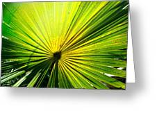 Radial Palm Greeting Card