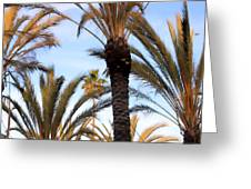 Palms 0758 Greeting Card