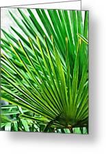 Palms 2 Greeting Card