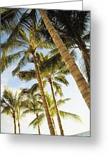 Palms Against Blue Sky Greeting Card