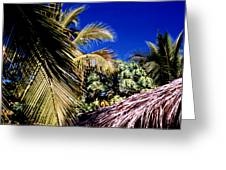 Palms All Around 2 Greeting Card