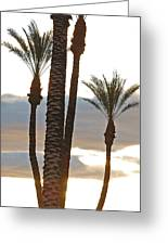 Palms And Light Greeting Card