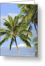 Palms And Mountaintops Greeting Card