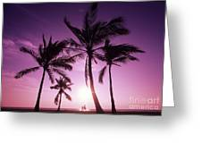 Palms And Pink Sunset Greeting Card