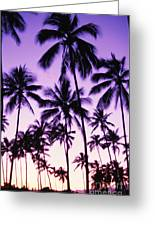 Palms And Purple Sky Greeting Card